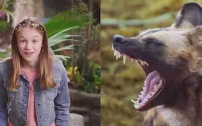 "Denver Zoo ""Teddy"""